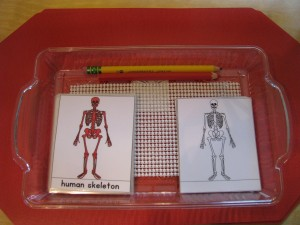 Parts of a Human Skeleton Booklet.  You can find these at www.montessoriprintshop.com and I beleive Montessori Services sells it too.