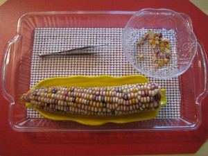 Tweezing Corn Kernels